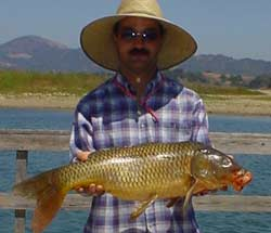 BUZZER ALARM FOR CARP PIKE FISHING BRAND NEW BITE